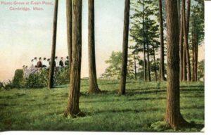 "5.02 CPC - ""Picnic Grove at Fresh Pond, Cambridge, Mass."" ca.1907-1912 [Robbins Bros., Boston, MA]"