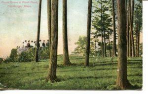 "5.03 CPC - ""Picnic Grove at Fresh Pond, Cambridge, Mass."" ca.1909 [Robbins Bros., Boston, MA] *"